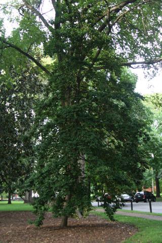 Image http://bioimages.vanderbilt.edu/lq/baskauf/w91161.jpg