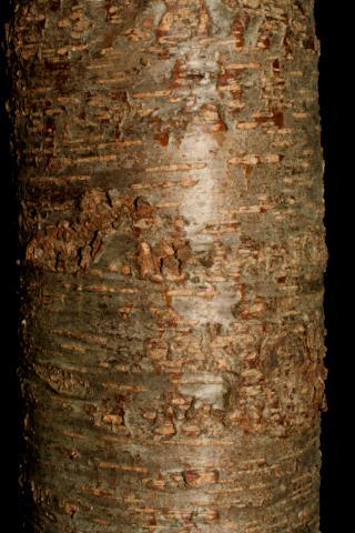 Image http://bioimages.vanderbilt.edu/lq/baskauf/w92436.jpg