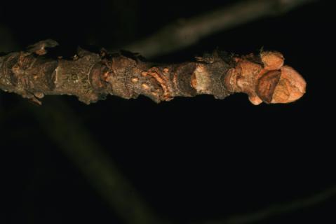 Image http://bioimages.vanderbilt.edu/lq/baskauf/w92446.jpg
