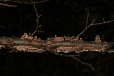 Image http://bioimages.vanderbilt.edu/lq/baskauf/w92453.jpg