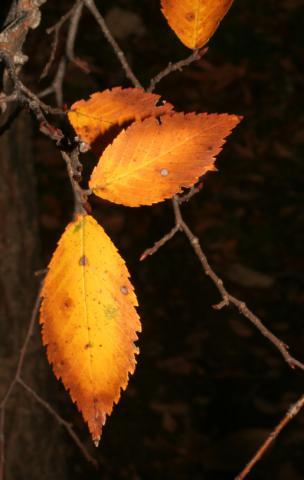 Image http://bioimages.vanderbilt.edu/lq/baskauf/w92467.jpg