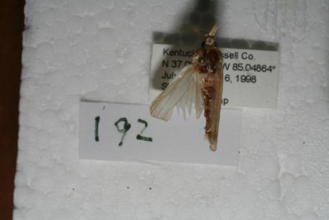 Image http://bioimages.vanderbilt.edu/lq/baskauf/w94007.jpg