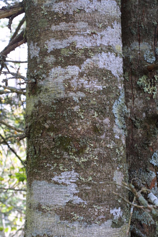 Image http://bioimages.vanderbilt.edu/lq/baskauf/wabfr--br11426.jpg