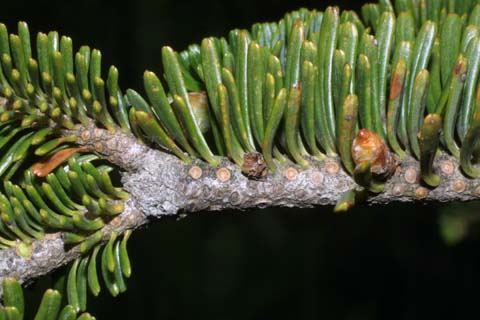 Image http://bioimages.vanderbilt.edu/lq/baskauf/wabfr--tw26471.jpg