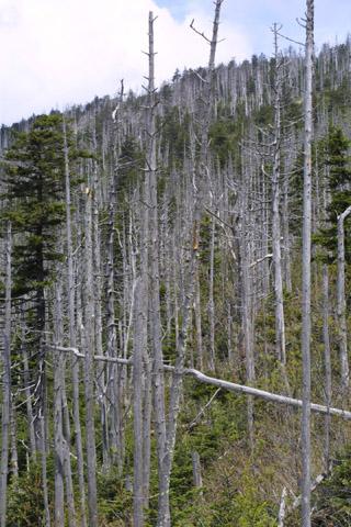 Image http://bioimages.vanderbilt.edu/lq/baskauf/wabfr--wpdead11406.jpg
