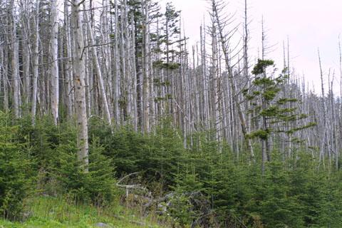 Image http://bioimages.vanderbilt.edu/lq/baskauf/wabfr--wpsprouts11439.jpg