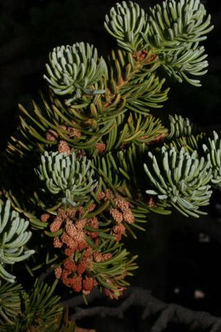 Image http://bioimages.vanderbilt.edu/lq/baskauf/wabla--comale-on-branch60105.jpg