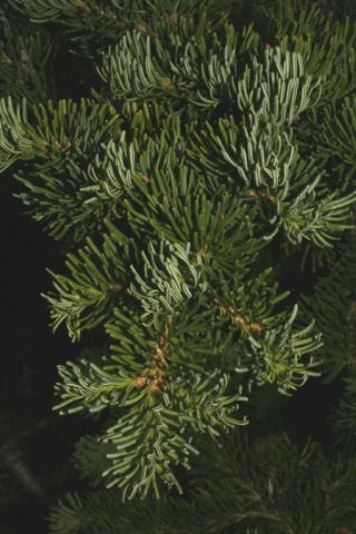 Image http://bioimages.vanderbilt.edu/lq/baskauf/wabla--lfdistant60093.jpg