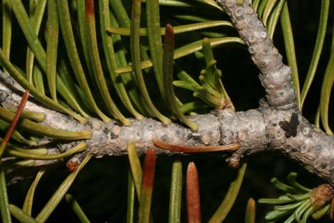 Image http://bioimages.vanderbilt.edu/lq/baskauf/wabla--tw60095.jpg