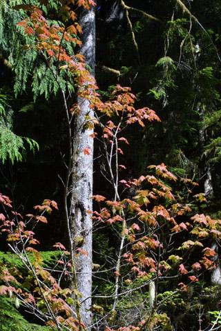 Image http://bioimages.vanderbilt.edu/lq/baskauf/wacci--lfred41733.jpg