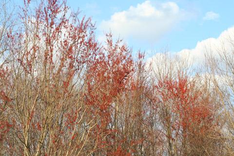 Image http://bioimages.vanderbilt.edu/lq/baskauf/wacru--wpmass-in-flower50749.jpg