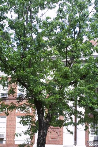 Image http://bioimages.vanderbilt.edu/lq/baskauf/wacsa2-wplarge12251.jpg