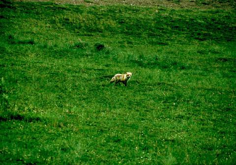 Image http://bioimages.vanderbilt.edu/lq/baskauf/walolags3519.jpg