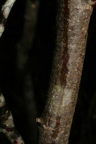 Image http://bioimages.vanderbilt.edu/lq/baskauf/walse2-br55961.jpg