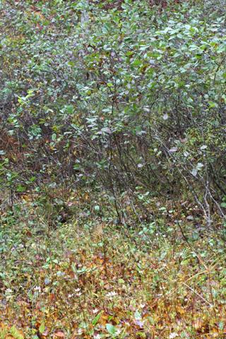 Image http://bioimages.vanderbilt.edu/lq/baskauf/walse2-wpdistant55941.jpg