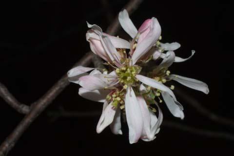 Image http://bioimages.vanderbilt.edu/lq/baskauf/wamar3-flfront31421.jpg