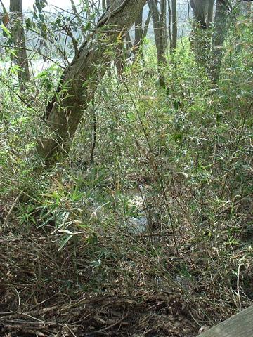 Image http://bioimages.vanderbilt.edu/lq/baskauf/wargi--wpd0168.jpg