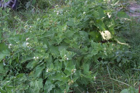 Image http://bioimages.vanderbilt.edu/lq/baskauf/warmi2-wpmass28610.jpg