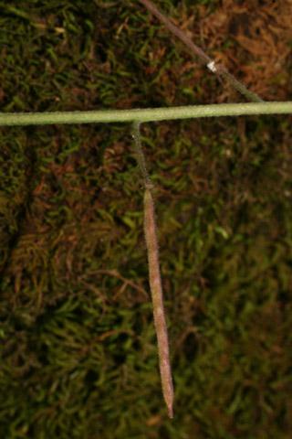 Image http://bioimages.vanderbilt.edu/lq/baskauf/warpe3-fr57771.jpg