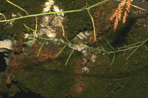 Image http://bioimages.vanderbilt.edu/lq/baskauf/warpe3-frdevelopment57814.jpg