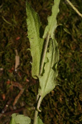 Image http://bioimages.vanderbilt.edu/lq/baskauf/warpe3-lfupper57772.jpg