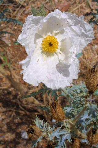 Image http://bioimages.vanderbilt.edu/lq/baskauf/warpl3-fl14750.jpg