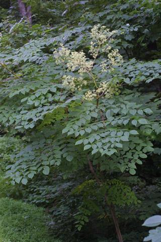Image http://bioimages.vanderbilt.edu/lq/baskauf/warsp2-wpin-flower28830.jpg