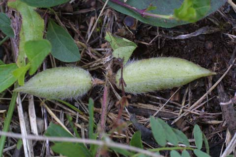 Image http://bioimages.vanderbilt.edu/lq/baskauf/waste7-fr24953.jpg