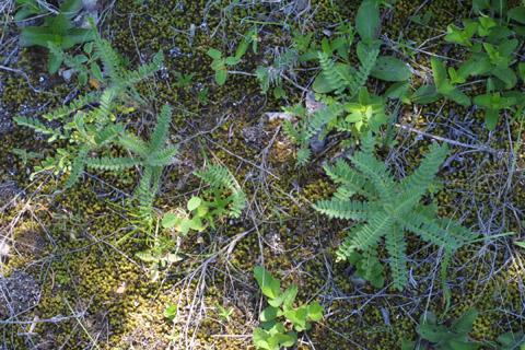 Image http://bioimages.vanderbilt.edu/lq/baskauf/waste7-wpseveral12836.jpg