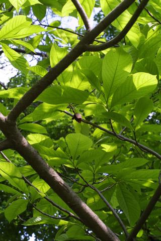 Image http://bioimages.vanderbilt.edu/lq/baskauf/wastr--flin-flower10851.jpg
