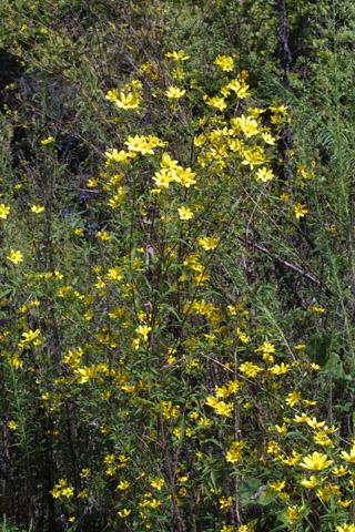 Image http://bioimages.vanderbilt.edu/lq/baskauf/wbiar--wp29294.jpg