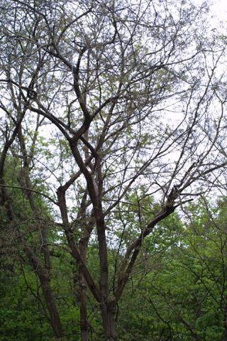 Image http://bioimages.vanderbilt.edu/lq/baskauf/wbrpa4-wplarge39527.jpg