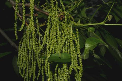 Image http://bioimages.vanderbilt.edu/lq/baskauf/wcaco15fl51572.jpg
