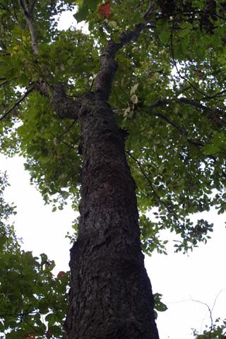Image http://bioimages.vanderbilt.edu/lq/baskauf/wcagl8-wplookup-large16344.jpg