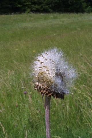 Image http://bioimages.vanderbilt.edu/lq/baskauf/wcanu4-fr12203.jpg