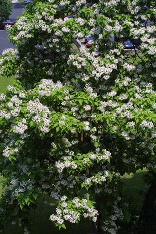 Image http://bioimages.vanderbilt.edu/lq/baskauf/wcasp8-flin-flower11088.jpg