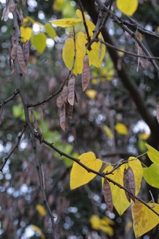 Image http://bioimages.vanderbilt.edu/lq/baskauf/wceca4-frmature10207.jpg