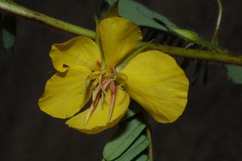 Image http://bioimages.vanderbilt.edu/lq/baskauf/wchfa2-flfront36484.jpg