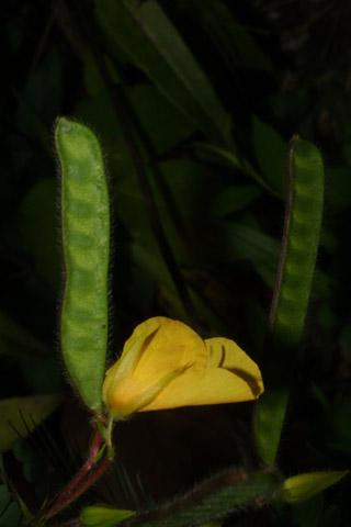 Image http://bioimages.vanderbilt.edu/lq/baskauf/wchfa2-frflower37983.jpg