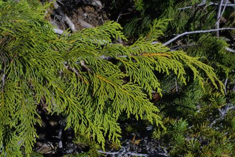 Image http://bioimages.vanderbilt.edu/lq/baskauf/wchno--lfdistant41325.jpg