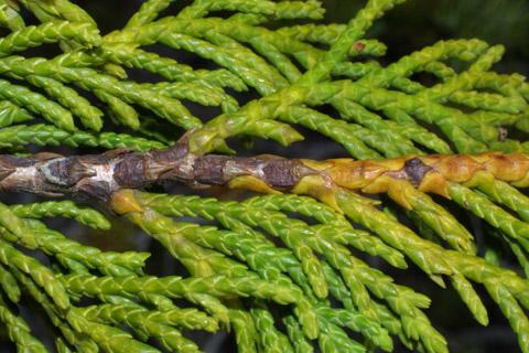 Image http://bioimages.vanderbilt.edu/lq/baskauf/wchno--tw41329.jpg