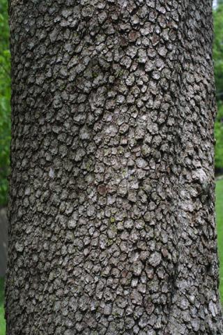 Image http://bioimages.vanderbilt.edu/lq/baskauf/wcofl2-brlarge10856.jpg