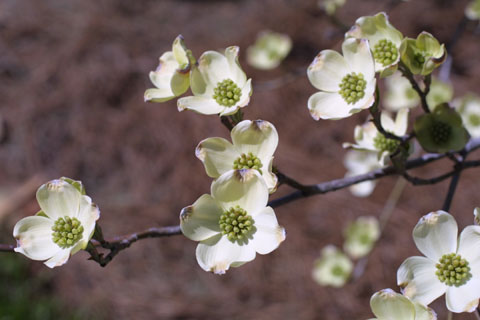 Image http://bioimages.vanderbilt.edu/lq/baskauf/wcofl2-flseveral10469.jpg