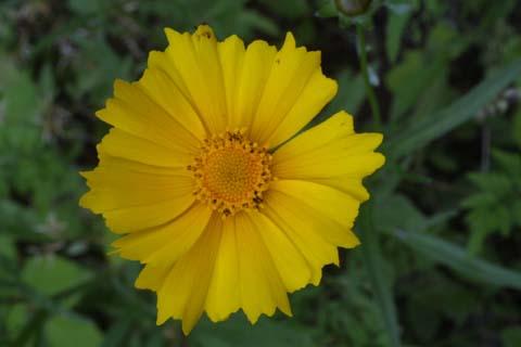 Image http://bioimages.vanderbilt.edu/lq/baskauf/wcola5-flfront24691.jpg