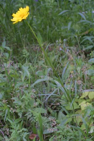 Image http://bioimages.vanderbilt.edu/lq/baskauf/wcola5-wp24695.jpg