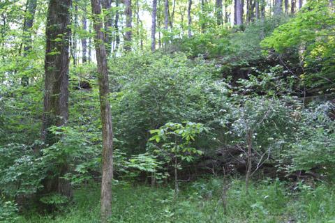 Image http://bioimages.vanderbilt.edu/lq/baskauf/wcrha2-wpdistant65146.jpg