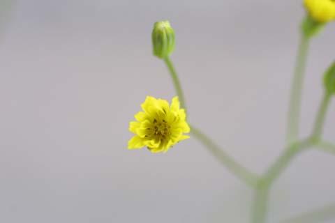 Image http://bioimages.vanderbilt.edu/lq/baskauf/wcrpu3-flfront23168.jpg