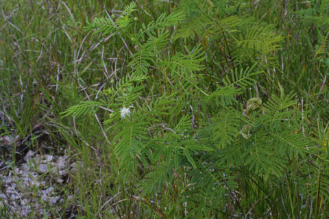 Image http://bioimages.vanderbilt.edu/lq/baskauf/wdeil--wp36999.jpg