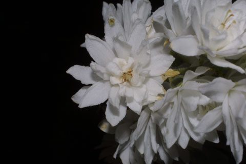Image http://bioimages.vanderbilt.edu/lq/baskauf/wdesc4-flfront34970.jpg