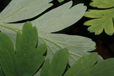 Image http://bioimages.vanderbilt.edu/lq/baskauf/wdiex--lfmargin-uplow52131.jpg